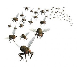 Bug Pest Control March